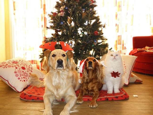 Put Your Pet First During The Holidays