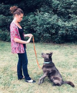 4 Reasons You Should Hire a Dog Trainer 2