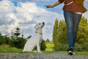 4 Reasons You Should Hire a Dog Trainer 4