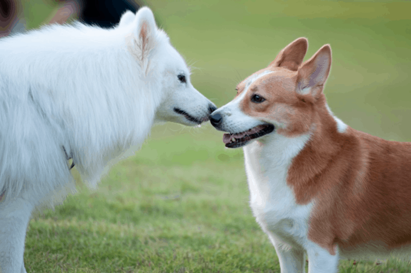 Why Going to an Off-Leash Seattle Dog Park is So Important - 4