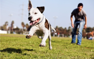 Why Going to an Off-Leash Seattle Dog Park is So Important