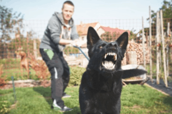 lead reactive dogs