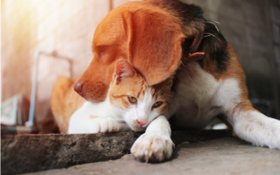 When You Have to Say Goodbye: Surviving Pet Loss