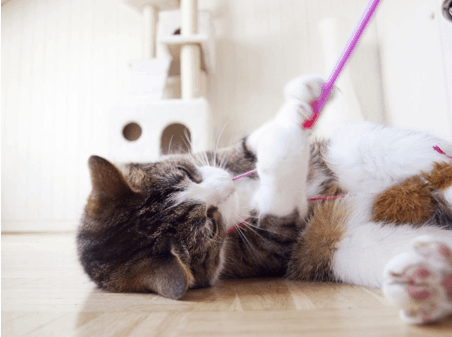 7 Reasons Your Seattle Cat Needs a Pet Sitter!