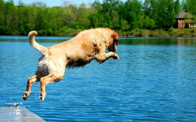 A Guide for Swimming with your Dog
