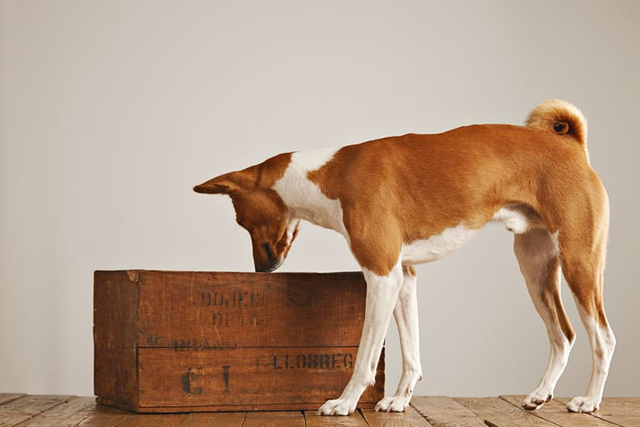 Nose Work: A Great Activity for Your Dog and You