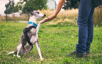 Frustrations When Training Your Dog