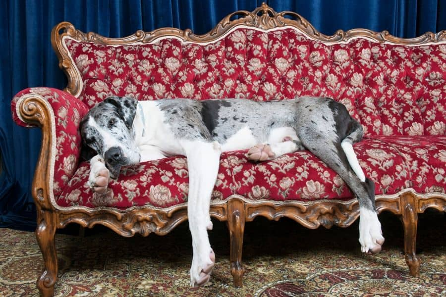 Which Dog Breed is Right for You?