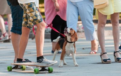 6 Tips for Socializing Your Puppy in Seattle