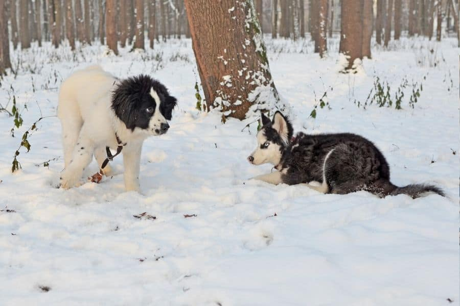 Puppy Socialization Dogs and other animals Seattle