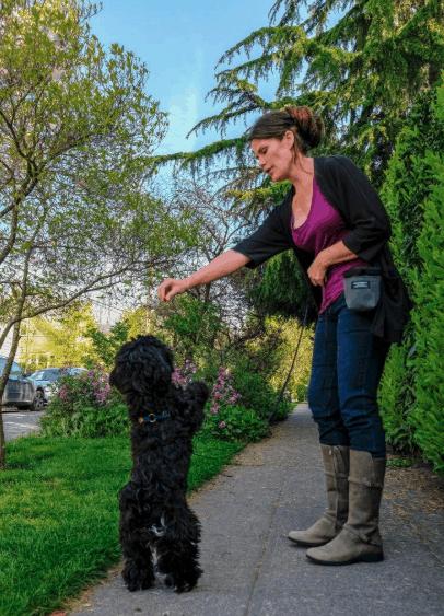 Puppy Socialization _ Seattle
