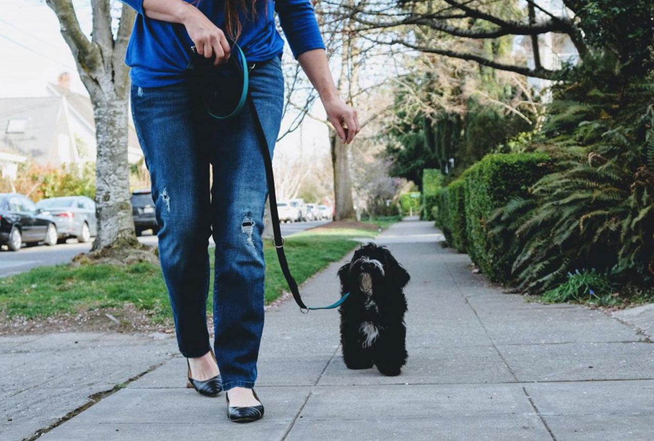 Dog Walking in Seattle