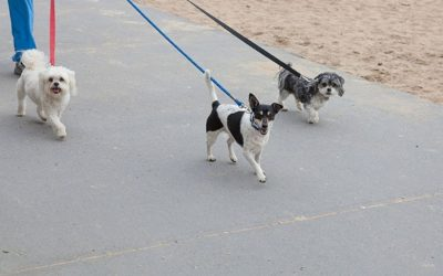 Four Reasons Your Dog Needs Daily Walks