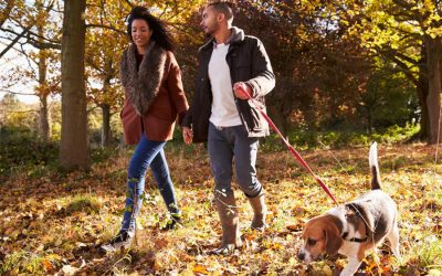 10 Steps for Bringing Home a New Dog in Seattle