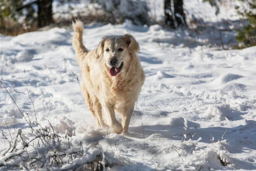 7 Winter Hazards your Pets Should Avoid in Seattle
