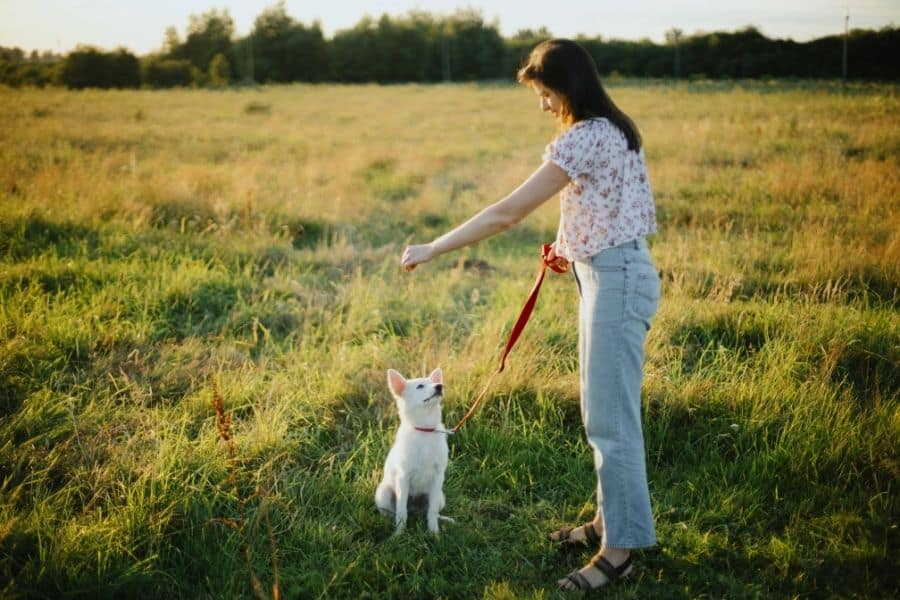 On How to Make Dog Training Successful
