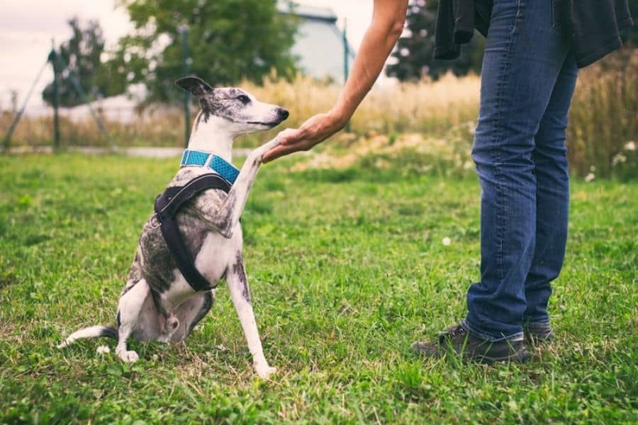 Tips On How to Make Dog Training Successful
