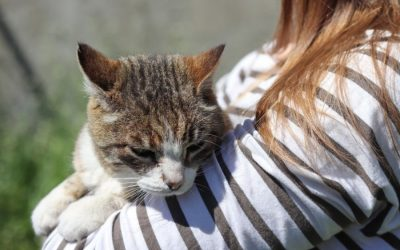 How to Care For Senior Cats!