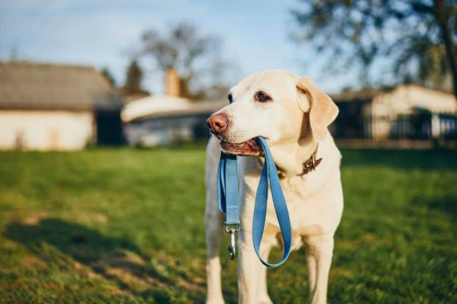 Reasons To Avoid On-Leash Greetings Between Dogs
