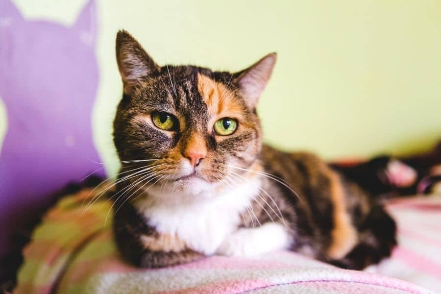 to Care For Senior Cats