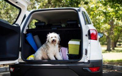 Pet-Friendly Travel Destinations In Washington State
