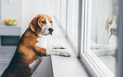 Preparing Your Dog to Go Back to Work